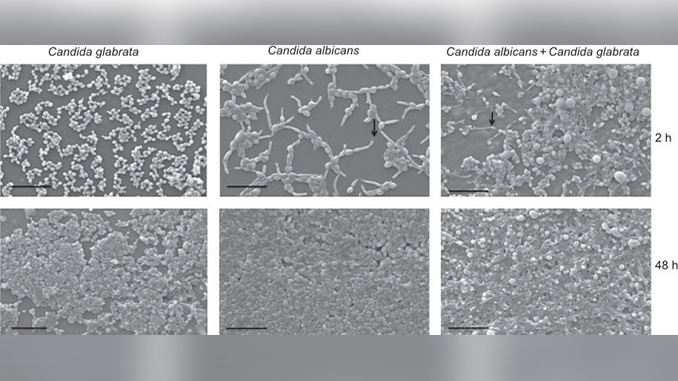 effect of silver nanoparticles Nanotechnology offers numerous biomedical applications and in so doing, exerts toxic effects agnps, one of the metallic nanoparticles is known for its.