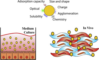 Challenges on the toxicological predictions of engineered nanoparticles