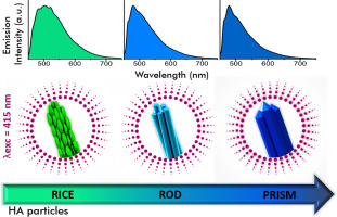 Structural properties and self-activated photoluminescence emissions in hydroxyapatite with distinct particle shapes